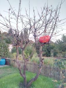 Herbst im Baum